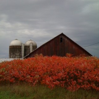 Riotous reds in the Amish Country…