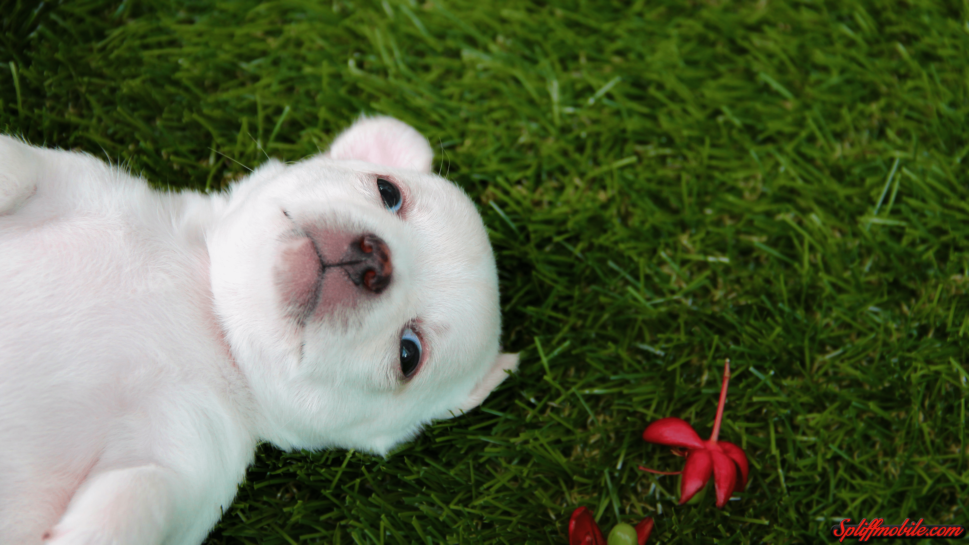 hd adorable puppy wallpaper