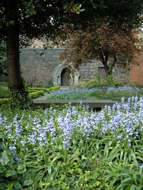 Huguenot bluebells