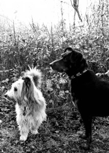 Mr. Barky and Minnie