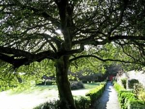 sheltering boughs