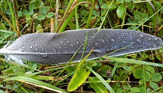 Wet Feather