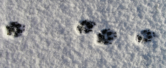 Minnie's paw tracks