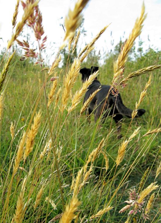 Minnie through grass