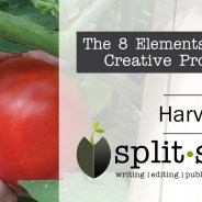 Element 7 of  the Creative Process:  Harvesting