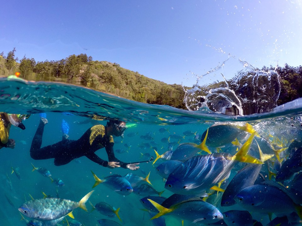 GoPro dome photo of snorkeling couple with lots of fish