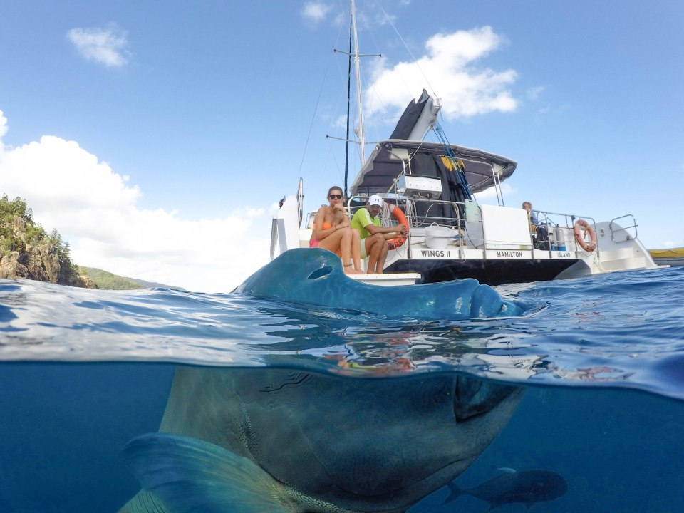 Split photo of a huge fish peeking out of the water with a yacht in the back.