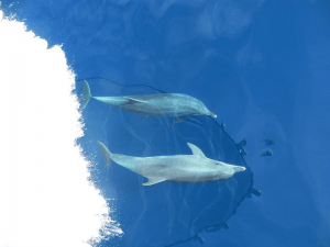 Dolphins-Split-Sea-Tours-DeLuxe-Blue-cave-Tour-from-Split