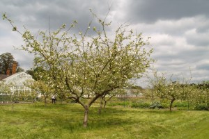 Testing exposure compensation on a tree in blossom - normal exposure
