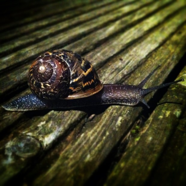 Snail on the Decking - Zoe Homes