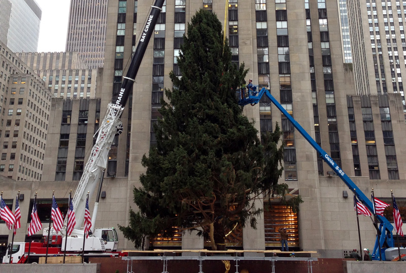 Craning the Rockefeller Christmas Tree into Place