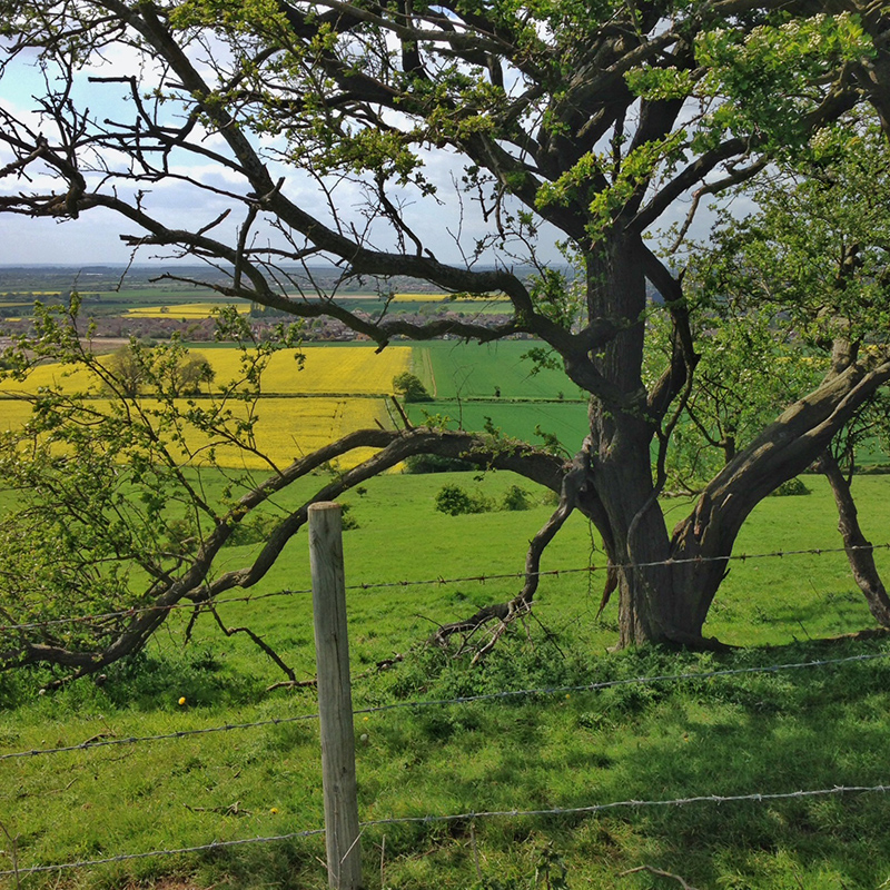 Lincoln, Lincolnshire - Inspirational Views Tree