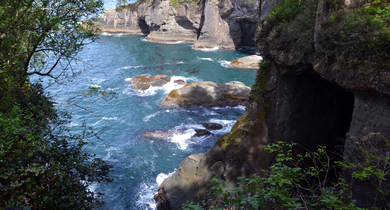 Zartusacan - From Cape Flattery