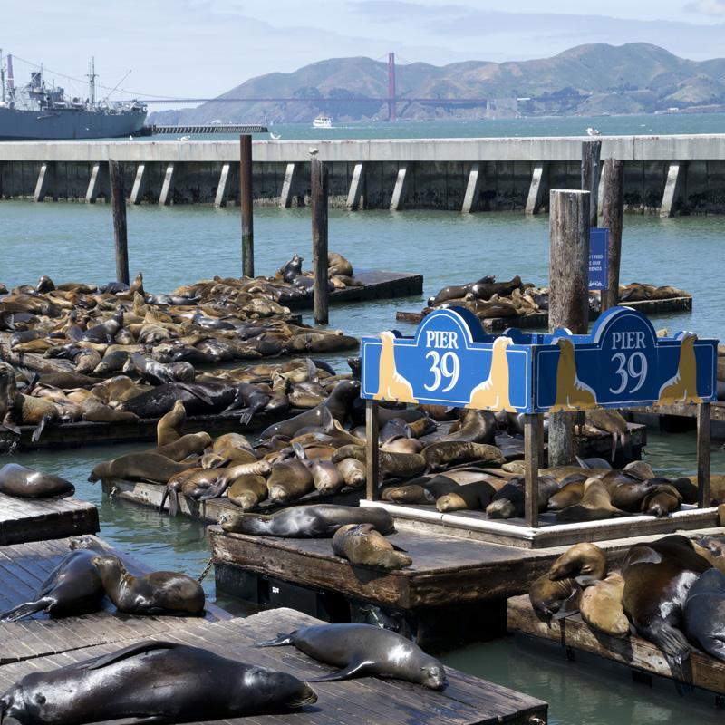 Zartusacan - San Francisco - Pier 39