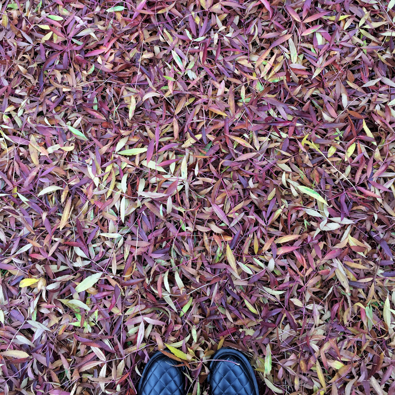 One Hour Outside - Autumn Leaves