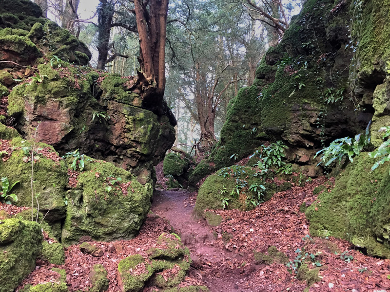Puzzlewood, Forest of Dean | Splodz Blogz