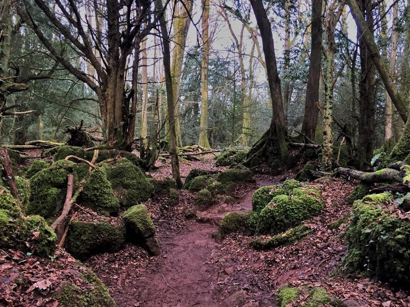 Puzzlewood, Forest of Dean | Splodz Blogz