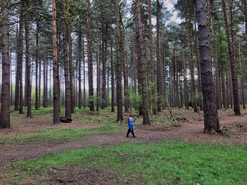 GRUFFALO HUNTING AT SHERWOOD PINES