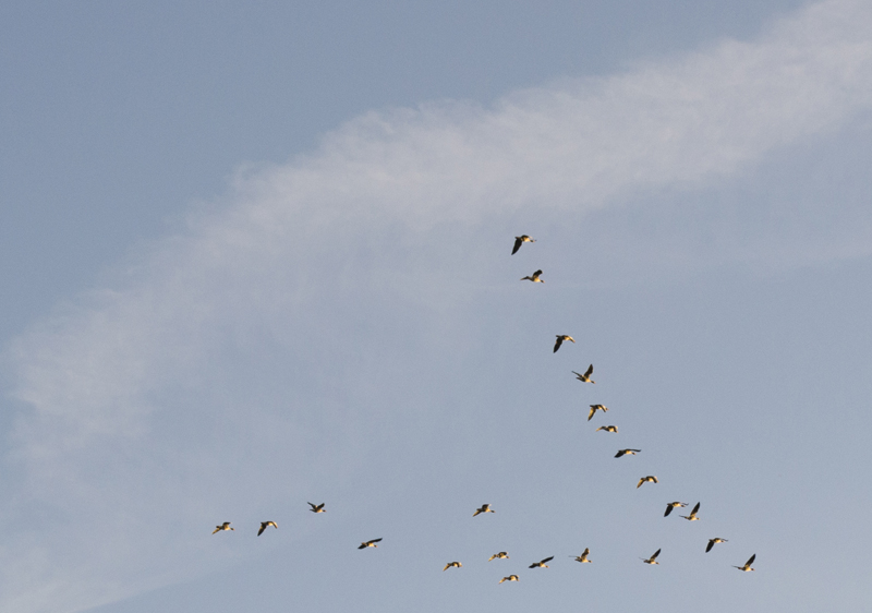 Splodz Blogz | Bird Spotting in the UK | Birds in Flight