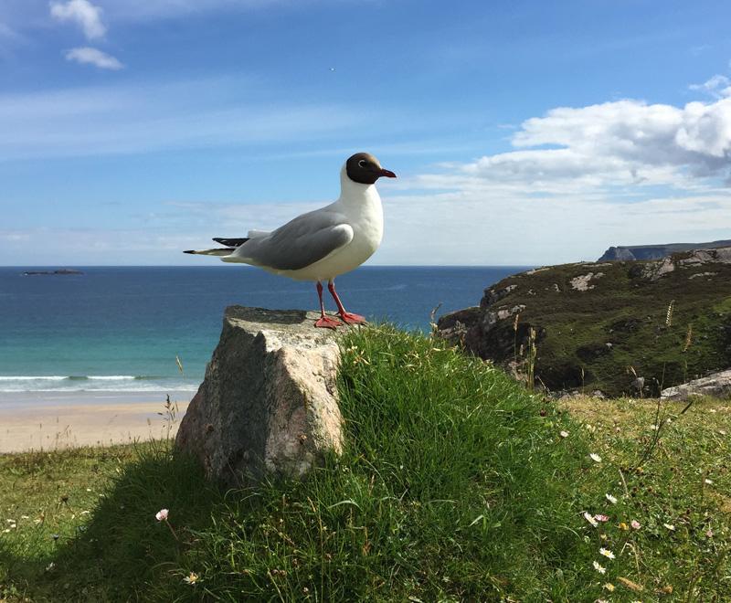 Splodz Blogz | Bird Spotting in the UK | Gul in Scotland