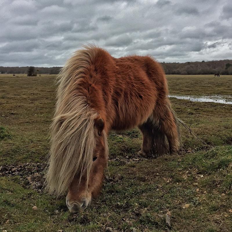 Splodz Blogz | New Forest Pony