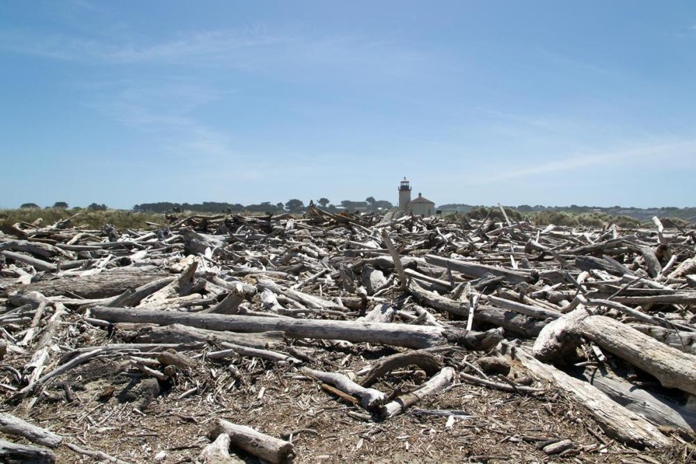 Splodz Blogz | Favourite Photos | USA - Driftwood and Lighthouse at Bullards Beach State Park
