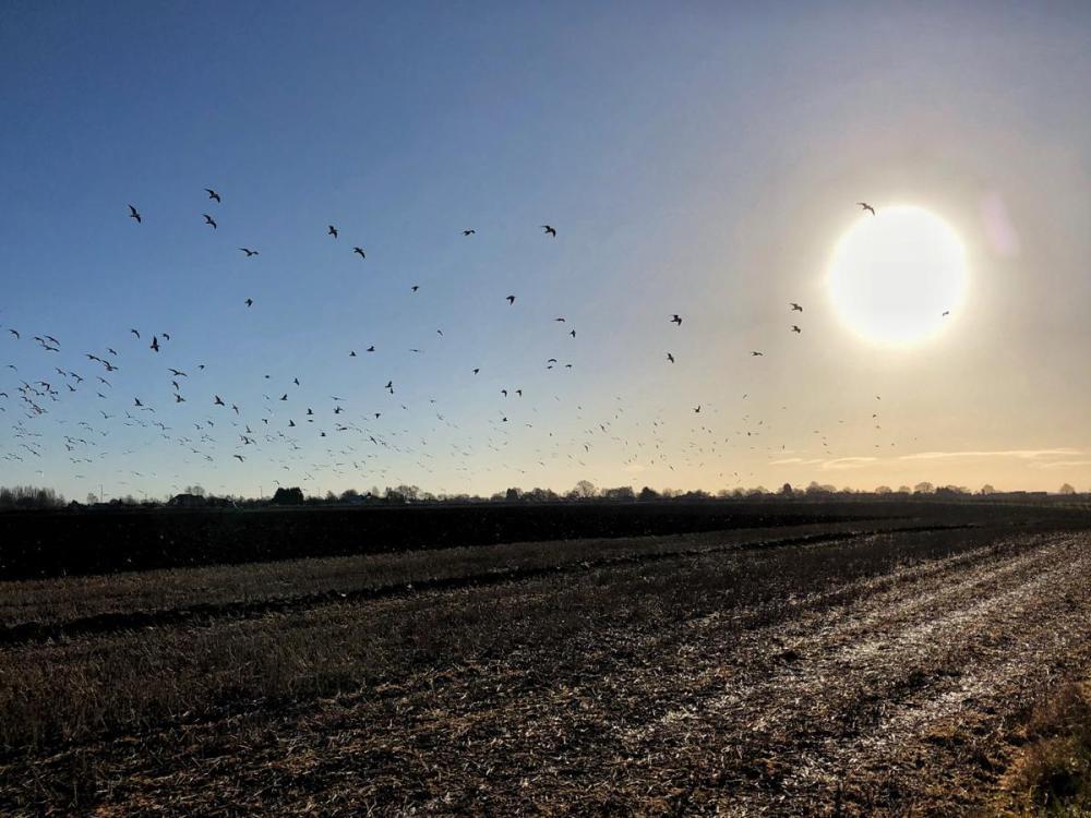 Splodz Blogz   Birds in Lincolnshire
