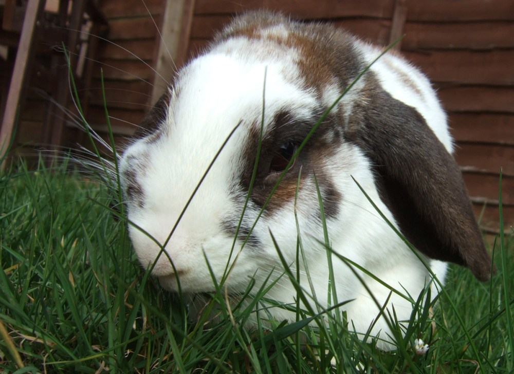 Splodz Blogz | Chocolate Bunny