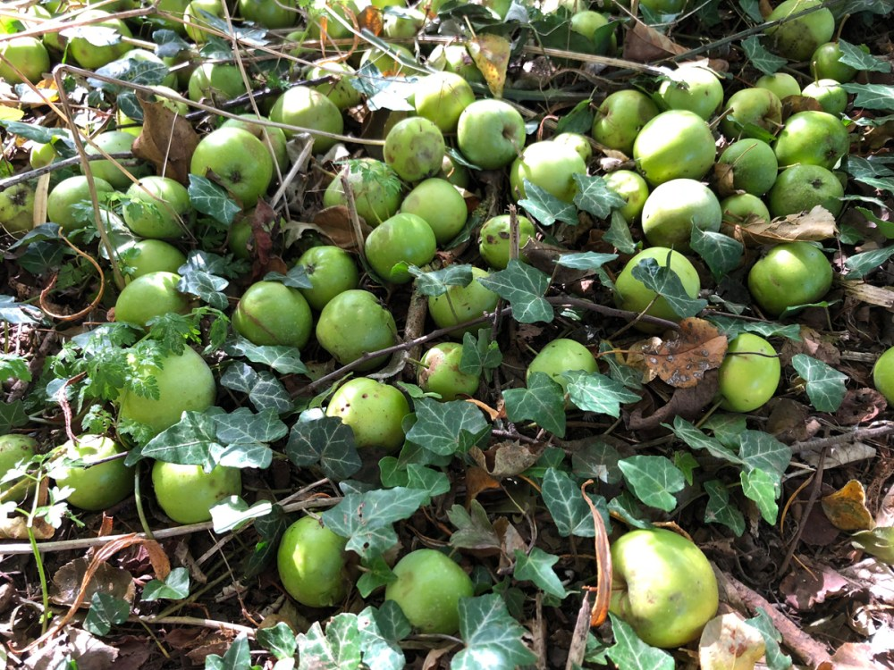 Splodz Blogz   GetOutside Activity Challenge - Fallen Apples