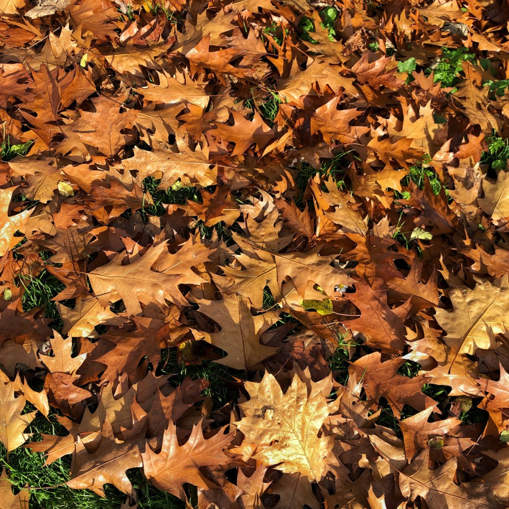 Splodz Blogz   One Hour Outside - Autumn Leaves