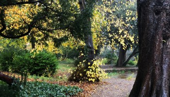 Splodz Blogz | One Hour Outside - Rainy Woodland