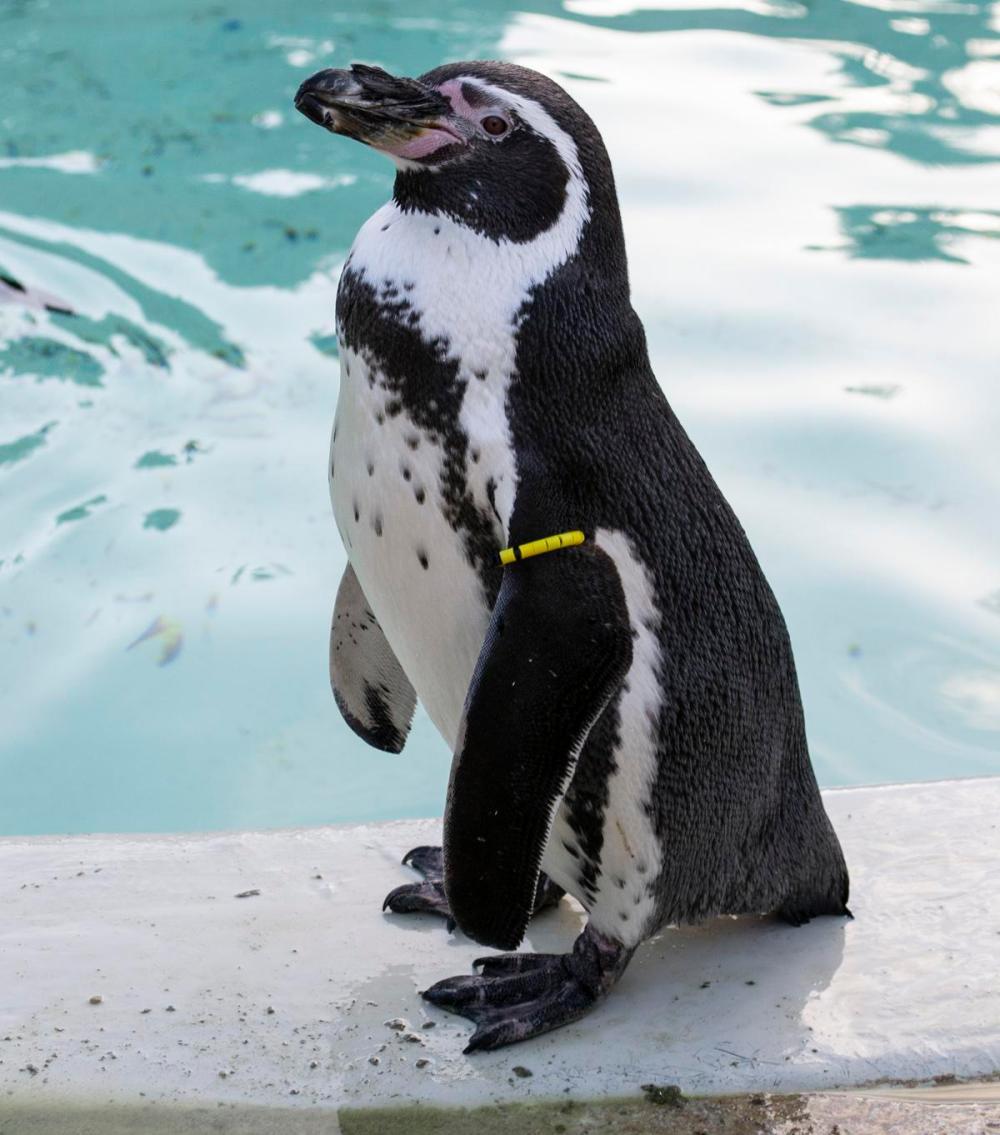 Splodz Blogz   Penguins at Cotswold Wildlife Park