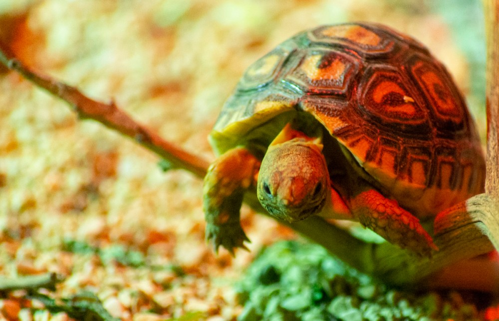 Splodz Blogz | Tortoise at Cotswold Wildlife Park