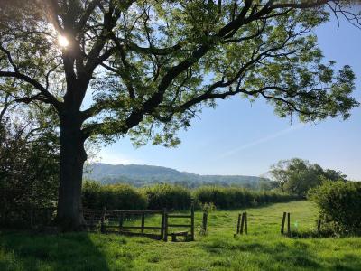 Splodz Blogz | Views from my Local Walk