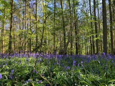 Splodz Blogz   Queen's Wood, Southam