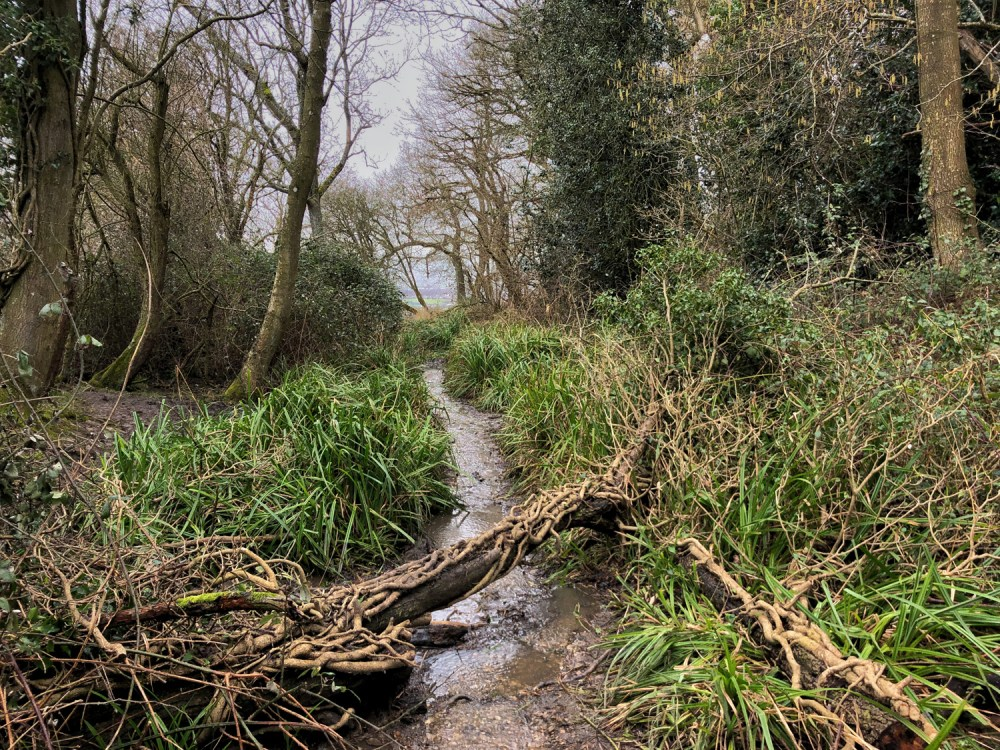 Splodz Blogz | Southam Woods, Stream