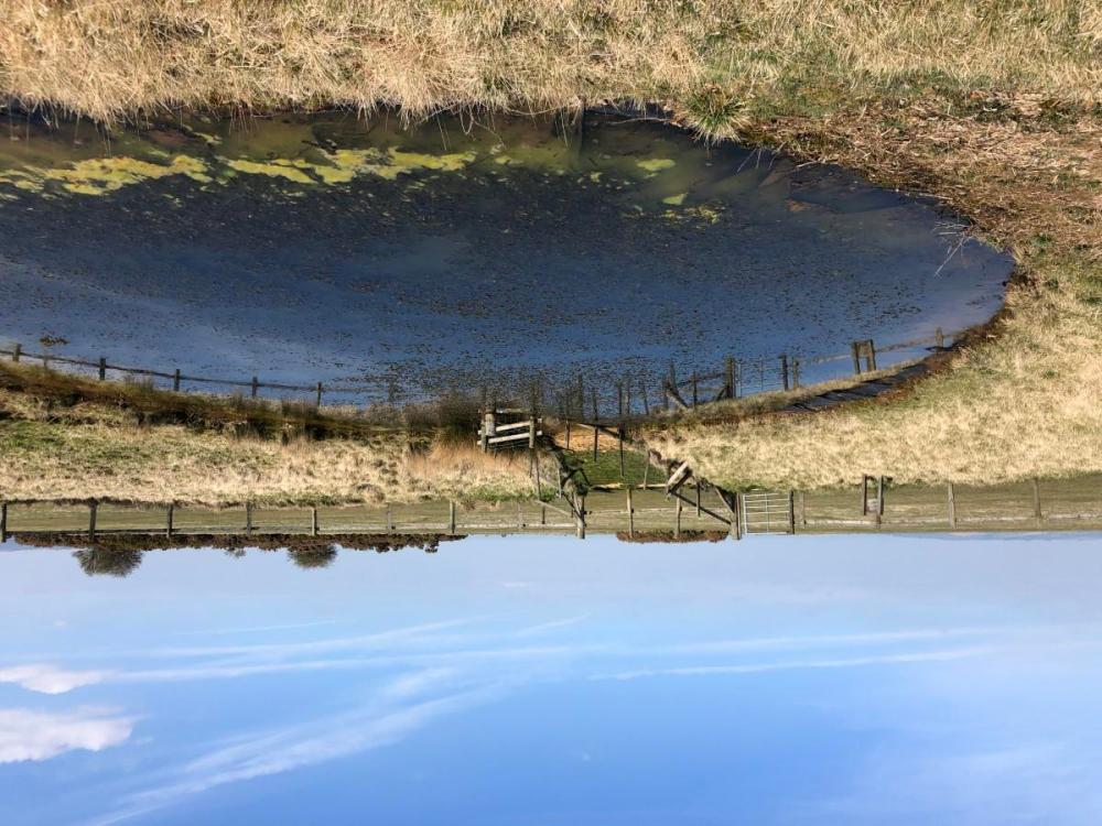 Splodz Blogz | Cleeve Common Dew Pond