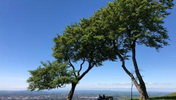 Splodz Blogz   Trees on Cleeve Hill