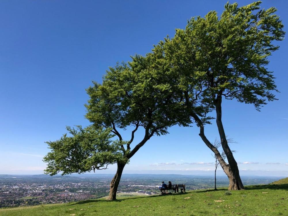 Splodz Blogz | Trees on Cleeve Hill