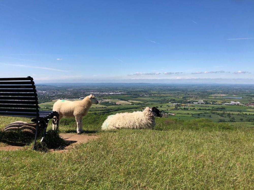 Splodz Blogz | Sheep on Cleeve Hill