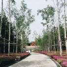 Path leading to the water garden