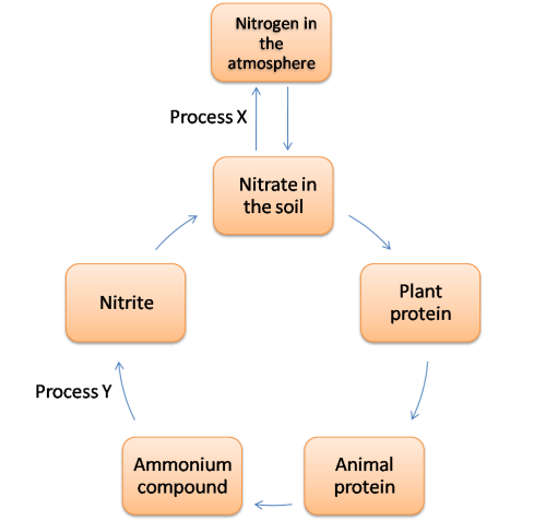 small resolution of the diagram shows a nitrogen cycle