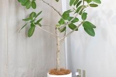癒しのツリー