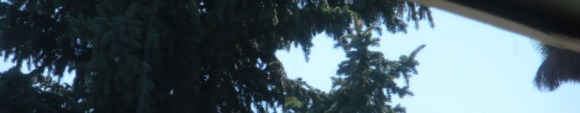 cropped-2011-the-big-move-304-sky-heart-in-tree.jpg