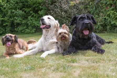 Pets On Lawn Spokane's Finest Lawns