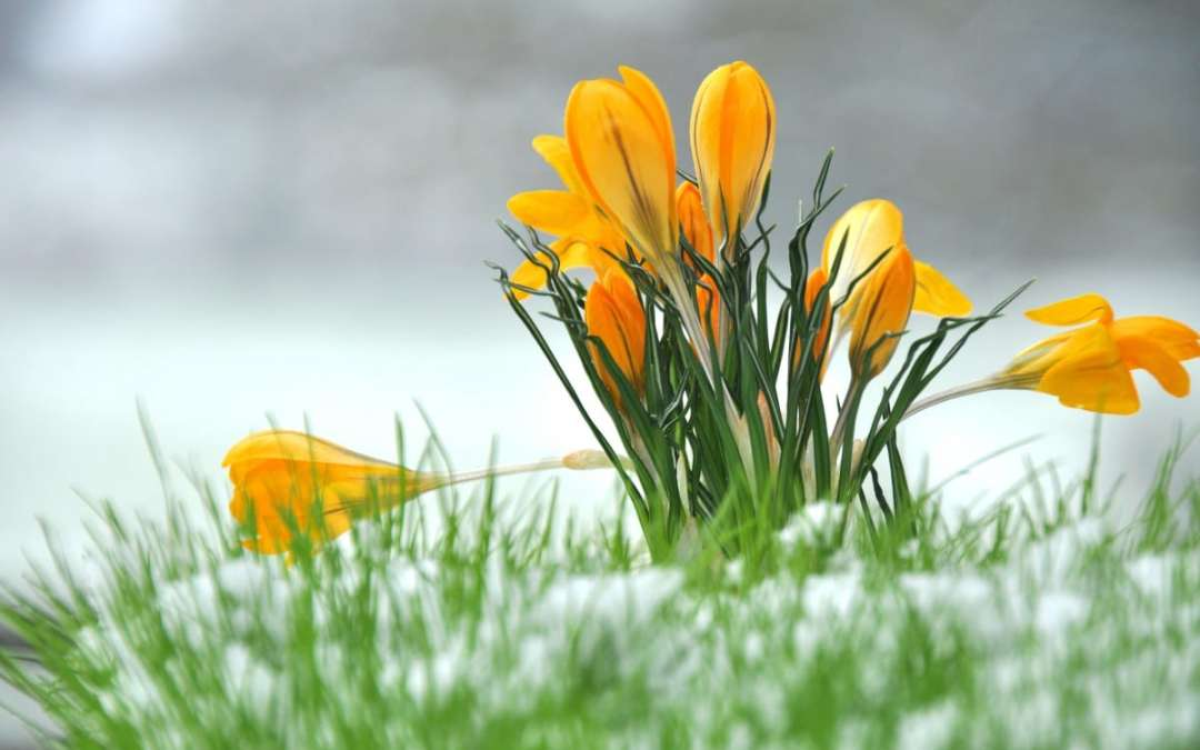 How to Prepare Your Yard From Winter To Spring in Spokane Valley, WA