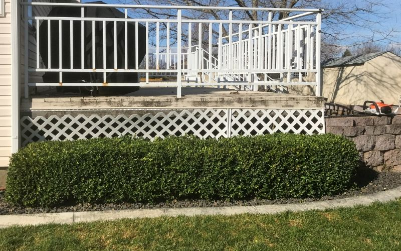 The same hedge pictured above, but after trimming. The hedge is neatly trimmed.