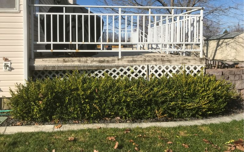 A small overgrown hedge lining a porch before trimming.