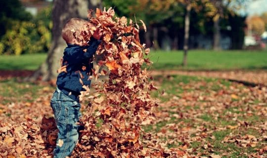 Fall Cleanup Services Spokane Valley