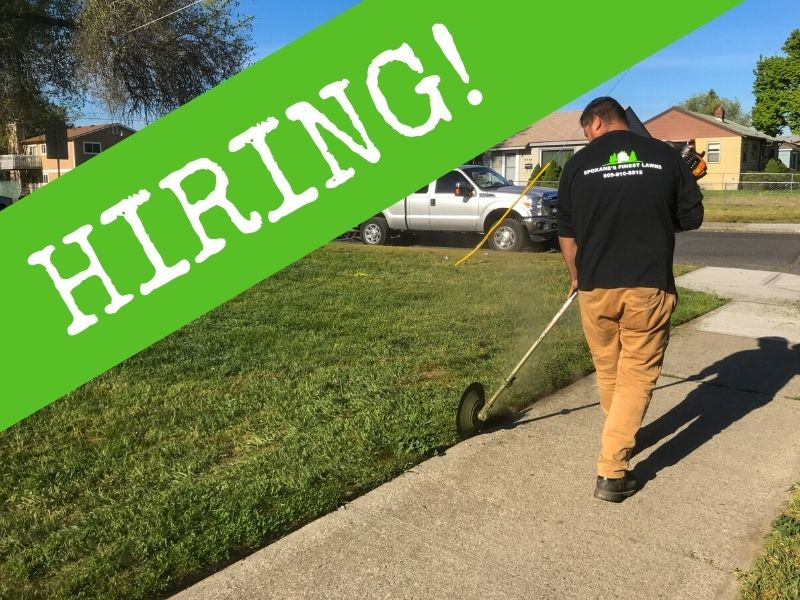 """A Spokane's Finest Lawns employee edging a side walk during a mowing service. To the side are the words, """"Hiring""""."""
